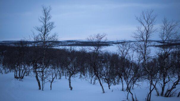 Kaldoaivin yksinäinen vaeltaja