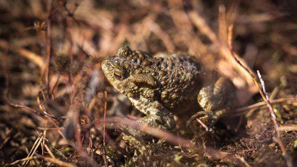 Tarina sammakoista ja ilmastonmuutoksesta