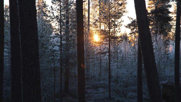 Metsän vieraat Karhunkierroksella